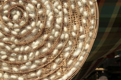 Gruppen av siden- avmaskar kokongreden Arkivfoto