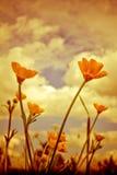 Gruppen av sommarsmörblomman blommar Julian Bound Royaltyfria Bilder