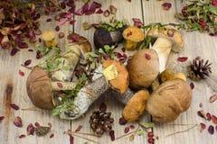 Gruppen av sopp plocka svamp med höstsidor på trä Arkivfoton