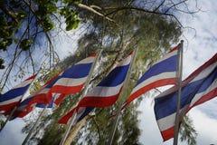 Gruppen av Thailand sjunker arrangera i rak linje flyttning till vinden under en blå himmel i en trädbakgrund Royaltyfria Bilder