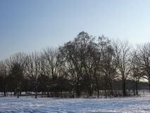 Gruppen av träd i mitt av snö täckte jordning Arkivfoton
