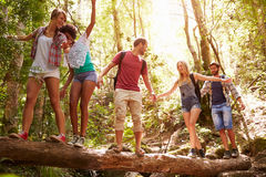 Gruppen av vänner går på att balansera på trädstammen i skog fotografering för bildbyråer