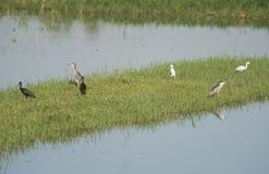 Gruppen av våtmarkvattenfåglar stod i vasser av flodmarsklan Arkivfoton