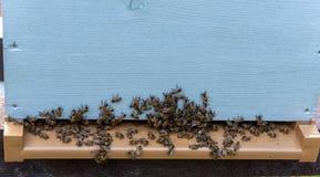 Gruppen Bienen am Bienenstock lizenzfreie stockfotos