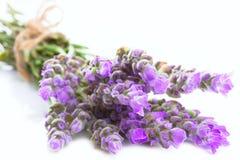 gruppen blommar lavendel Arkivfoto