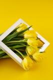 gruppen blommar tulpanyellow Fotografering för Bildbyråer