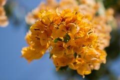 gruppen blommar yellow Arkivbilder
