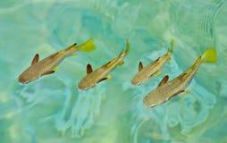 Gruppen schwimmende Fische stockbild