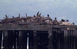 Gruppen-Vogel-aalender Morgen Sun Stockfotos