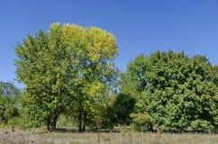 Gruppenbäume im Frühherbst, Razgrad Stockbild
