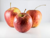 Gruppengalaäpfel Lizenzfreies Stockfoto