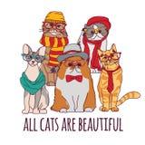 Gruppenmodehaustierhippie-Katzen und -zeichen lokalisieren Weiß Stockfotografie