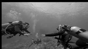 Gruppenunterwasseratemgerättauchen stock video footage