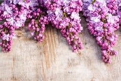 Grupper av lilan på gammal sjaskig träbakgrund Arkivfoton