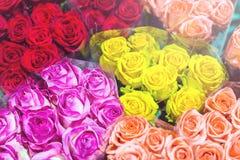 Grupper av multiclored rosor ny bakgrundsblomma Blomsterhandlareservice Grossistblomsterhandel Blommalagring Top beskådar Royaltyfri Foto