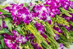 Grupper av purpurfärgade orkidér royaltyfri bild