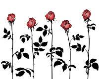 Grupper av rosor Vektor Illustrationer
