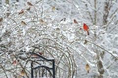 Grupper av sångfåglar på en snöig dag Arkivbild