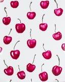 grupper som tecknar spolning för vattenfärg för blomningflodtrees Röda körsbär royaltyfri fotografi