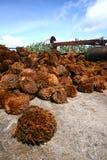 grupper tömmer frukt Royaltyfri Foto