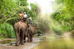 Gruppera turister för att rida på elefant i skogen Chiang Mai royaltyfria bilder
