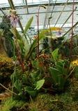Gruppering av härliga kött som äter växter med blommor arkivbild