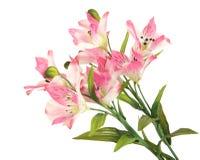 Gruppfilialblomning-växt med rosa färgblomman Royaltyfri Foto
