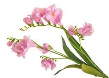 Gruppfilialblomning-växt med rosa färgblomman Arkivfoto
