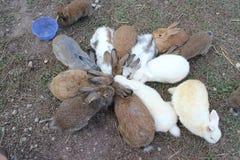 Gruppi del coniglio fotografie stock
