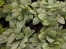 4 gruppi di belle foglie Immagine Stock