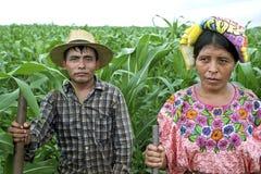 Gruppieren Sie Porträt von indischen Paaren für Bevölkerungsschwerpunkt-Zentralamerika-Tageslichtkultur-Land countr Mais FieldAgr Stockbild