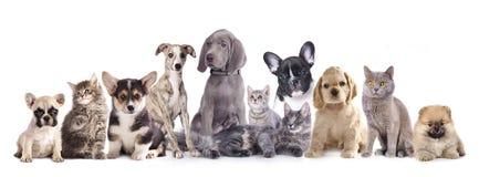 Gruppkatt och hund Arkivbild