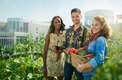 Gruppo amichevole che raccoglie gli ortaggi freschi dal giardino della serra del tetto e che progetta stagione del raccolto su un Fotografie Stock Libere da Diritti