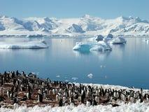 Gruppo antartico del pinguino Fotografia Stock Libera da Diritti