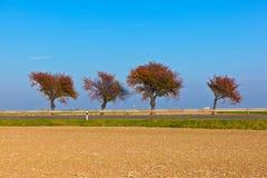 Gruppo armonico di alberi fotografie stock
