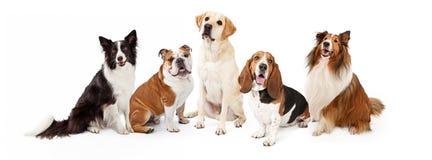 Gruppo comune delle razze del cane della famiglia Fotografie Stock Libere da Diritti