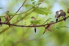 Gruppo degli uccelli Fotografia Stock