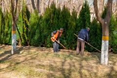 Gruppo dei lavoratori pronti ad iniziare a piantare gli alberi con le loro pale un giorno di molla soleggiato immagine stock libera da diritti