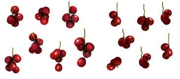 Gruppo dei mirtilli rossi Fotografia Stock