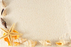 Gruppo dei Seashells fotografie stock