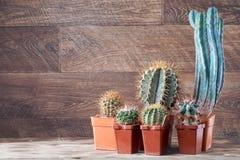 Gruppo del cactus Insieme realistico del cactus per progettazione della decorazione 'brainstorming' di concetto nel gruppo Gruppo Fotografia Stock