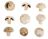 Gruppo del collage di funghi del fungo prataiolo Immagini Stock Libere da Diritti