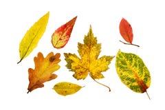 Gruppo del foglio di autunno Fotografia Stock