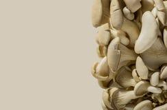 Gruppo del fungo di ostrica sul giusto bordo dei precedenti Fotografia Stock Libera da Diritti