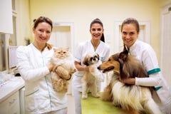 Gruppo del veterinario sorridente con gli animali all'ambulanza dell'animale domestico immagini stock