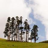 Gruppo dell'albero sul prato verde nel paesaggio collinoso fotografia stock libera da diritti