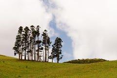 Gruppo dell'albero sul prato verde nel paesaggio collinoso immagini stock libere da diritti