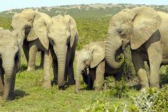 Gruppo della famiglia di elefanti Fotografia Stock Libera da Diritti