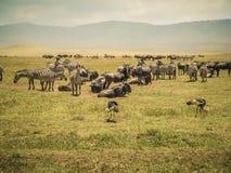 Gruppo della fauna selvatica e della natura animale di animali erbivori differenti fotografia stock libera da diritti