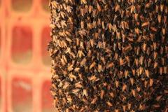 Gruppo delle api operaie Fotografia Stock Libera da Diritti
